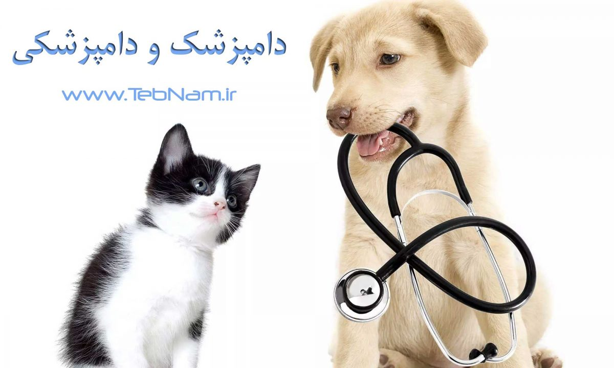 درباره شغل دامپزشک و دامپزشکی در سایت طب نام